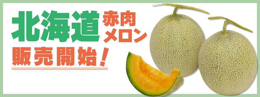 北海道赤肉メロン 販売開始!